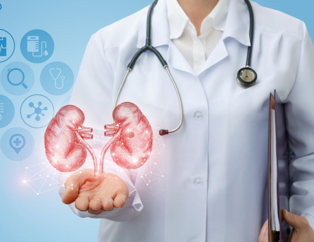 Kidneys filter the blood throughout the body. They act as the waste disposal system of the body wherein they send unwanted products to the ureter and that passes out as urine.