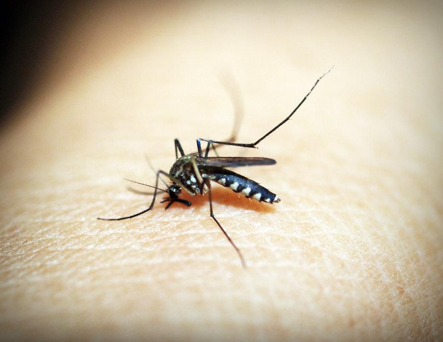 Malaria - Ycdscc