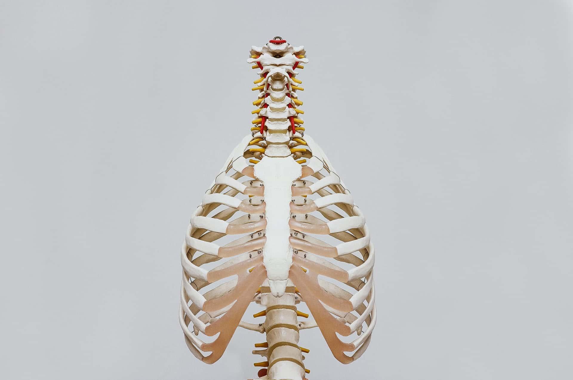 COPD - YCDSCC